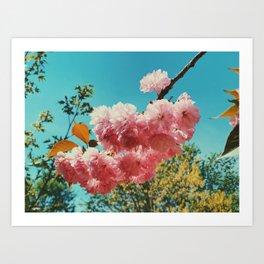 Spring Flowers in D.C. Art Print