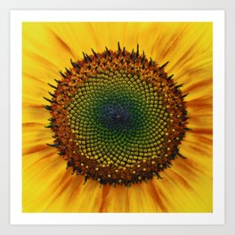 Sunflower & Seed Art Print