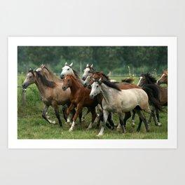 Arabian Horses Art Print