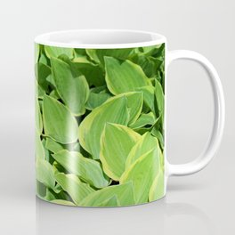 Hosta -Golden Tiara Hostaceae Coffee Mug
