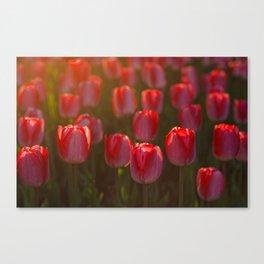 Tulips spring Canvas Print