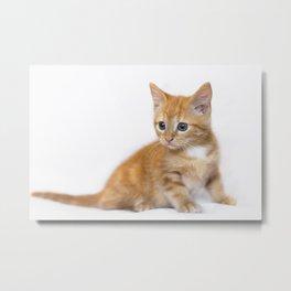 Ginger Kitten Metal Print