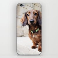dachshund iPhone & iPod Skins featuring Dachshund  by Brooke Davies - Arrow Creek Designs