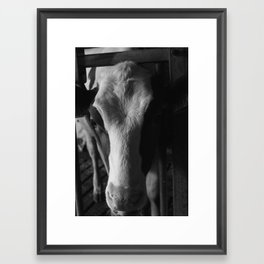 Cow no.1 Framed Art Print