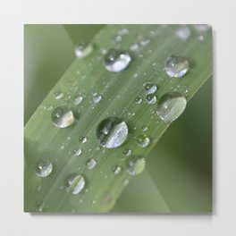 droplets on a blade of grass Metal Print