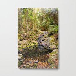 Forest Pond Metal Print