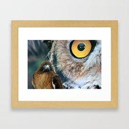 Hawk Eyes Framed Art Print