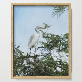 Cattle Egret In a Tree Serving Tray