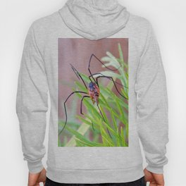 Spider in the Garden Hoody