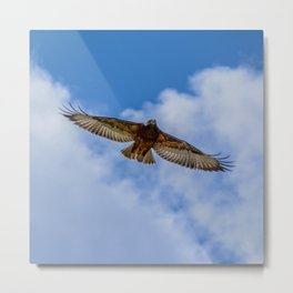 Jackal Buzzard In Flight Metal Print