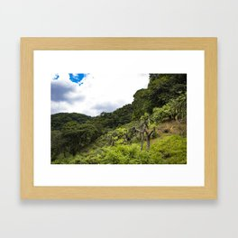 Dragon Fruit Fields Growing on the Side of a Hill in the Rainforest of Nicaragua Framed Art Print