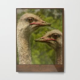 Mother and Child Ostriches Metal Print