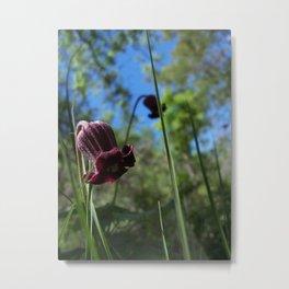 Purple Flowers in TX Metal Print