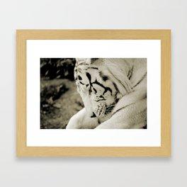 THE WHITE TIGER I Framed Art Print