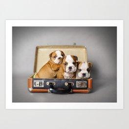 English bulldog puppies Art Print