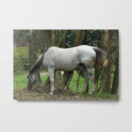 White Horse Next to Trees Metal Print