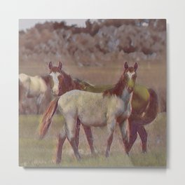 Feral Horses II Metal Print