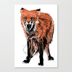 Angry Fox (color) Canvas Print