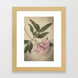 Scents of Spring - Pink Peony ii Framed Art Print