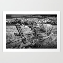 Texas Longhorn Steer by an Old Wooden Fence in Black and White Art Print
