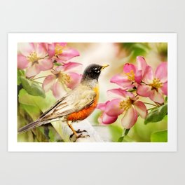 Spring Song. American Robin in spring cherry blossom. Art Print