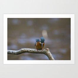 Kingfisher in the rain Art Print