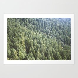 Island Forest Art Print