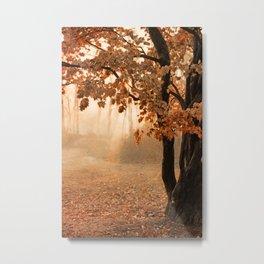 Rust Apricot Orange Maple Autumn Sunrise Metal Print