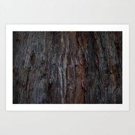 Kings Canyon Tree no.2 Art Print
