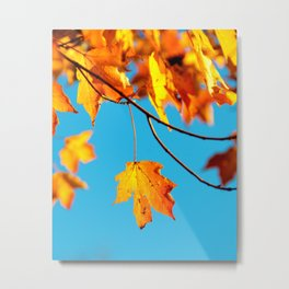 Autumn Leaf on a Branch (Color) Metal Print