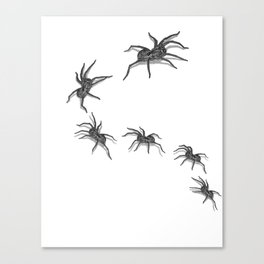Wolf Spiders Canvas Print