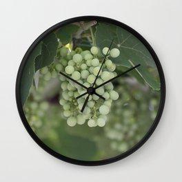 grape grows on vineyard in spring Wall Clock