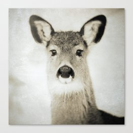 DEER - Old Friends Collection Canvas Print