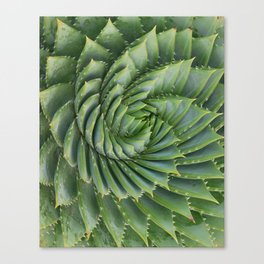 Green spirale Canvas Print