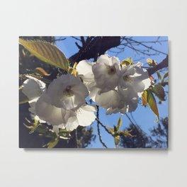 Australia Flower Metal Print