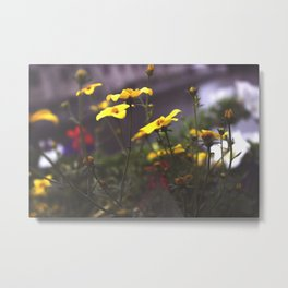 Nature - Wild Yellow Metal Print