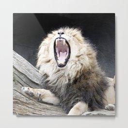 Tired LION Metal Print