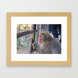Pensive Snow Monkey Framed Art Print