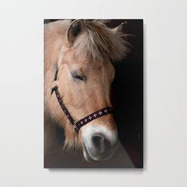 Fjord horse Metal Print