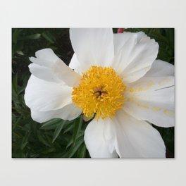 White Beauty by Teresa Thompson Canvas Print