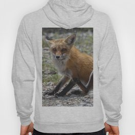 Itchy Fox Hoody