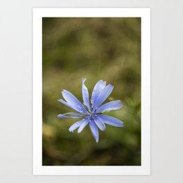 Chicory #3 Art Print
