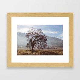Solo Tree. Framed Art Print