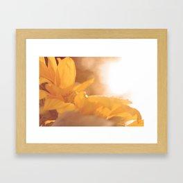 Sun Flare Sunflower Framed Art Print