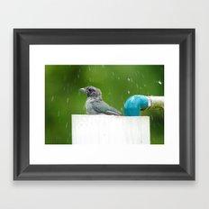 bird in a bath Framed Art Print