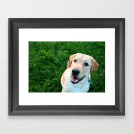 smiling yellow lab Framed Art Print