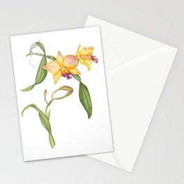 Flowering yellow cattleya orchid plant Stationery Cards