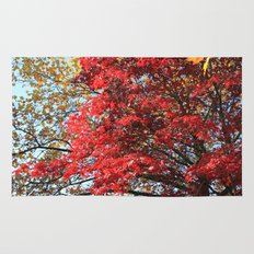 Fall maple trees of red leaves, in blue sky.  nature landscape photography. Rug