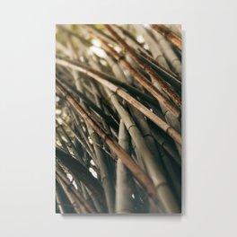 Bamboo Study 2 Metal Print