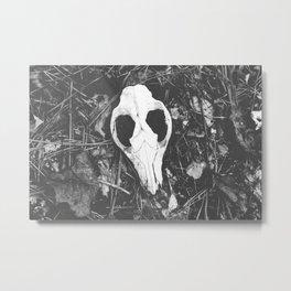 Woodland Animal Skull Black and White Photography Metal Print